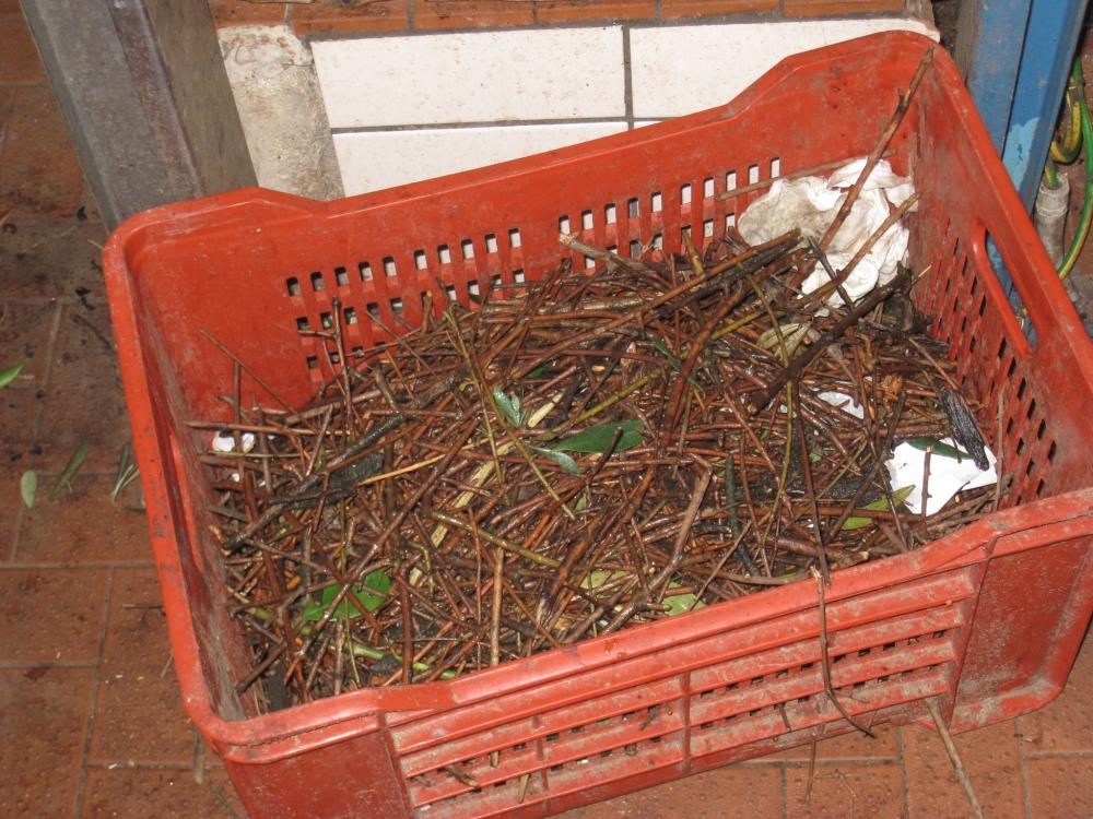 Residui di olivo in cassetta