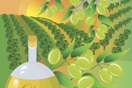 È nata l'interprofessione dell'olio e delle olive da mensa