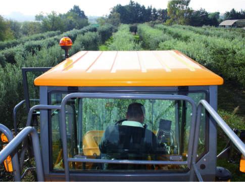 oliveto superintensivo