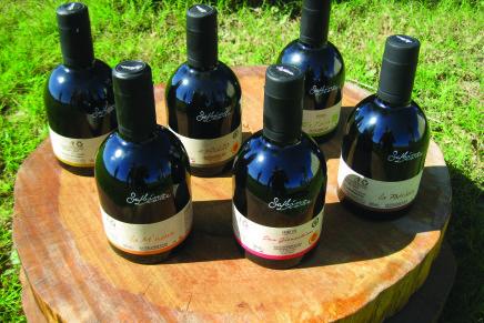 La grande passione di Sabino Leone: fare olio