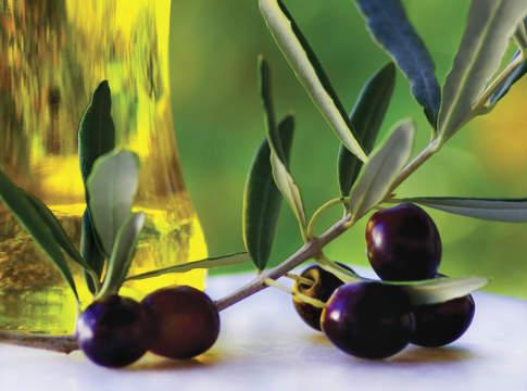mercato olivicoltura biologica
