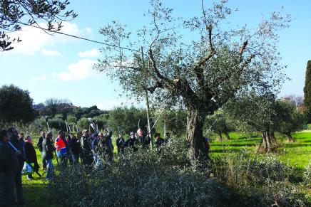 Interventi straordinari per oliveti tradizionali