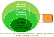 gestione dell'oliveto