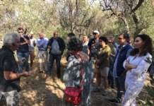 corso onaoo accademia in olivicoltura