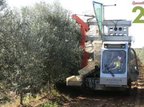 olivicoltura