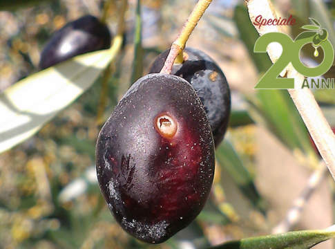 difesa oliveto