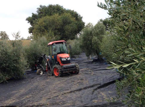 reti per la raccolta delle olive