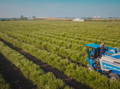 superintensivo in olivicoltura