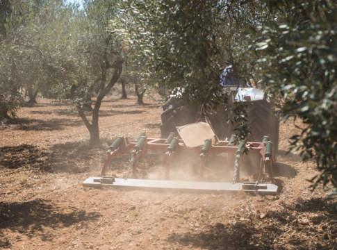 macchine agricole per la gestione dell'oliveto