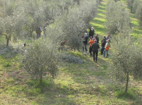 formazione sulla potatura dell'olivo