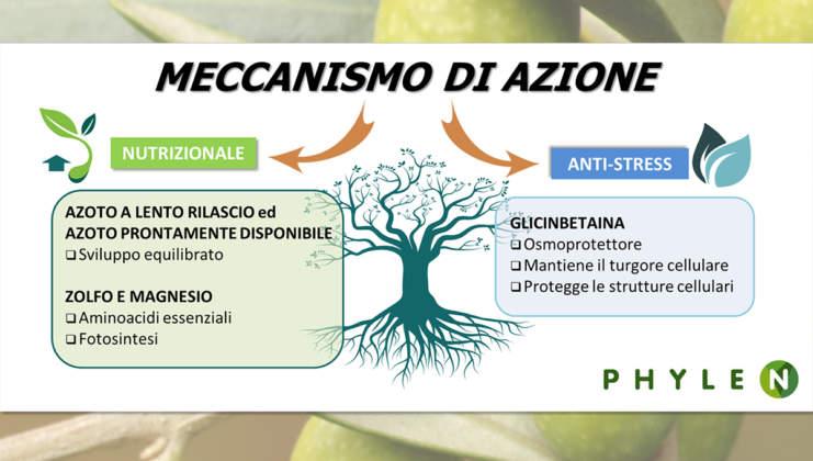 Meccanismo di azione di Phylen di Biolchim