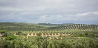 produzioni di olio in spagna
