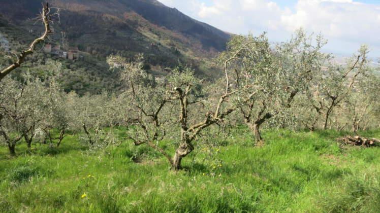 oliveto percorso da fuoco