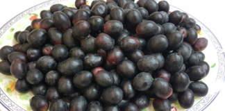 cultivar resistenti alla xylella
