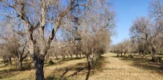 piano straordinario olivi puglia