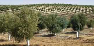 strumenti innovativi per oliveto