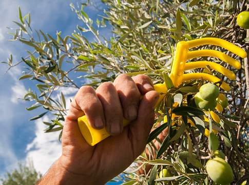 raccolta meccanizzata delle olive