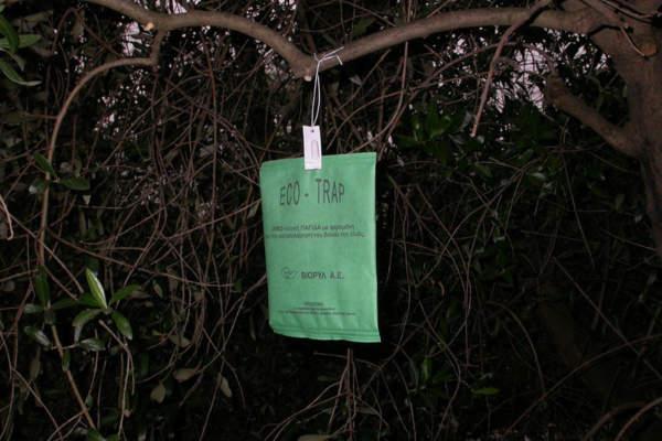 mosca olivo trappola a pannello