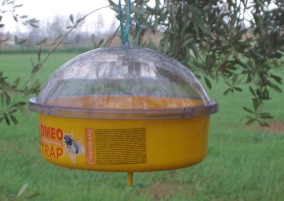 mosca olivo trappola tipo McPhail