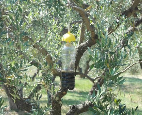 mosca olivo trappola a bottiglia
