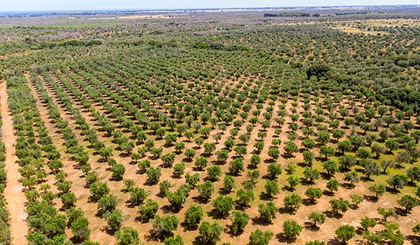 oliveto pugliese lecce