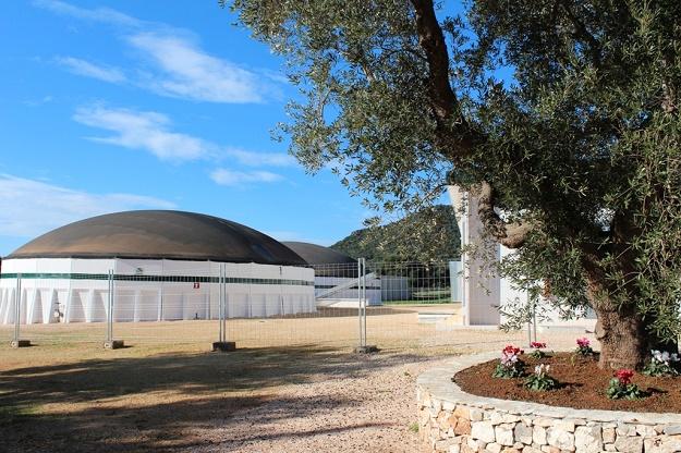 olivicoltura italiana