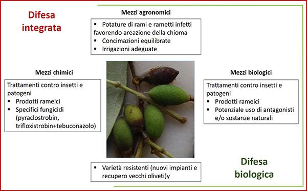 lebbra olivo trattamenti