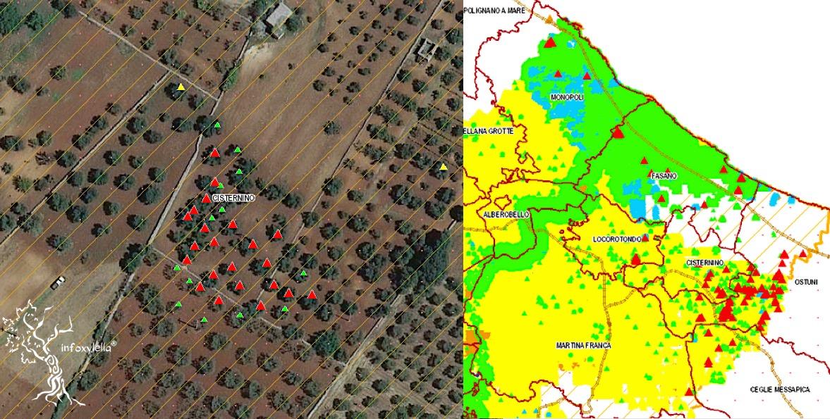 Mappa Xylella Puglia.Xylella 136 Olivi Positivi In Zona Cuscinetto E Contenimento Olivo E Olio