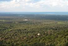 webinar accademia olivo e olio