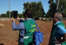 xylella olivi infetti airf monitoraggio