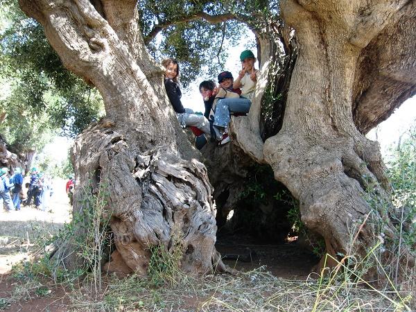 giornata mondiale olivo