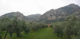 sardegna olio di oliva
