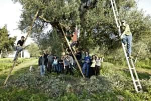 olivo nel mondo