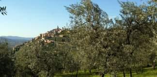 umbria olio di oliva