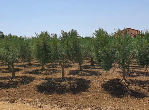 olio biologico valle benuara