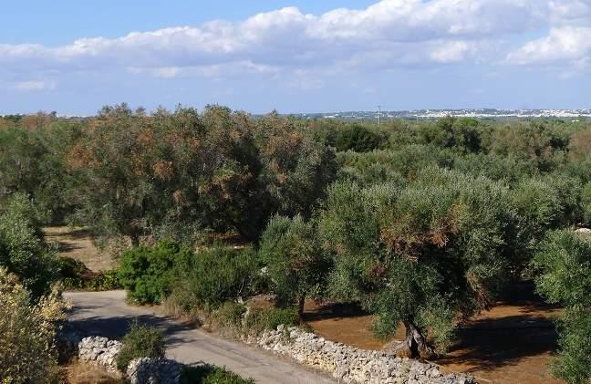 Xylella Puglia