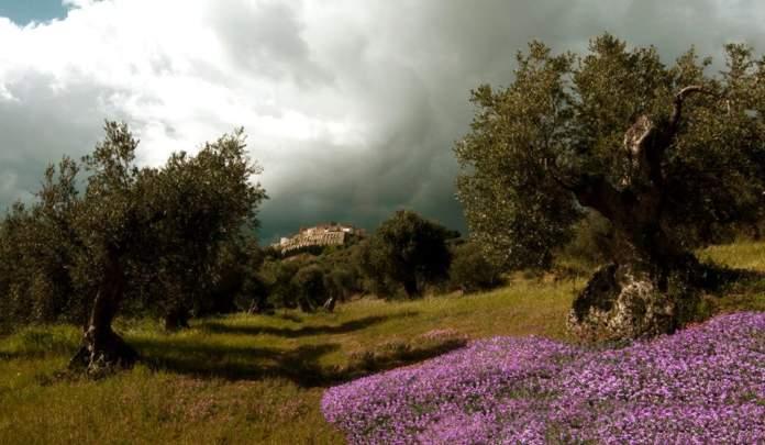 qualità olio di oliva