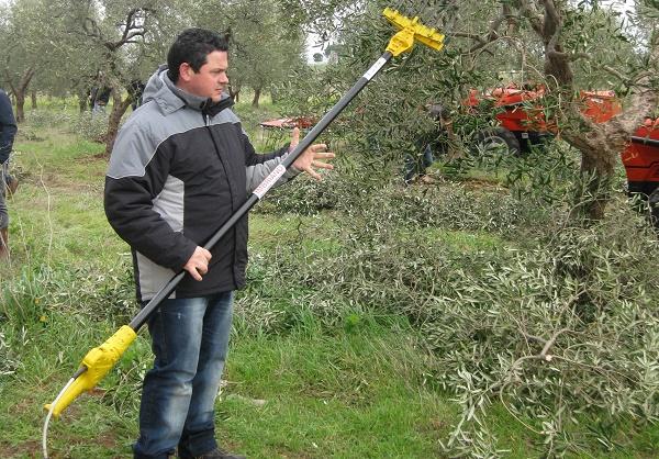 esoscheletri passivi in olivicoltura
