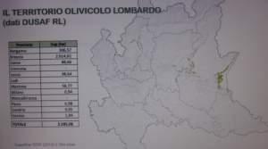 olivicoltura in lombardia