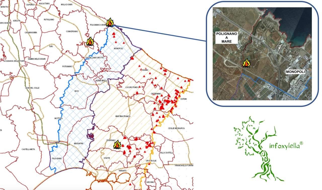 Mappa Xylella Puglia.Monitoraggio Xylella In Puglia Altri 81 Olivi Infetti Olivo E Olio
