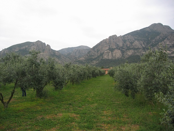 associazione olivicoltori sardi