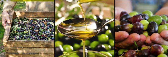 produzione olio di oliva e olive 2021