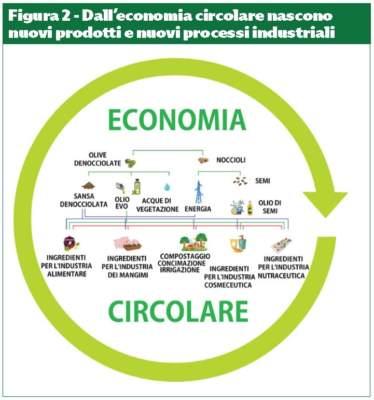 economia circolare nella filiera olearia