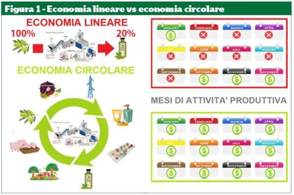 economia lineare vs economia circolare nella filiera olearia