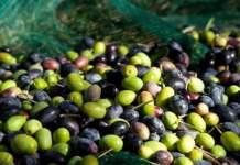 olivicoltura 4.0