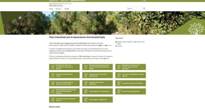 piano straordinario rigenerazione olivicola
