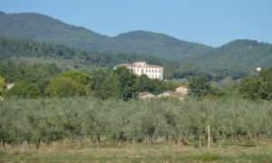 Olivi a Firenze