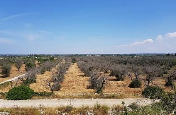 Xylella Copagri Puglia