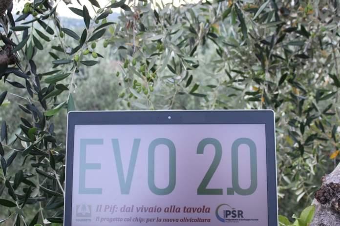 olivicoltura toscana
