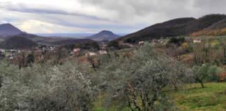olivicoltura veneta